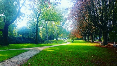Walking route in a park with sycamore trees on a sunny autumn day. Stock Photo