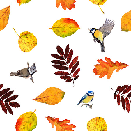 parus: Seamless watercolor pattern birds and autumn leaves. Beautiful red, orange and yellow colors of fall. Textile print. Isolated on white background.
