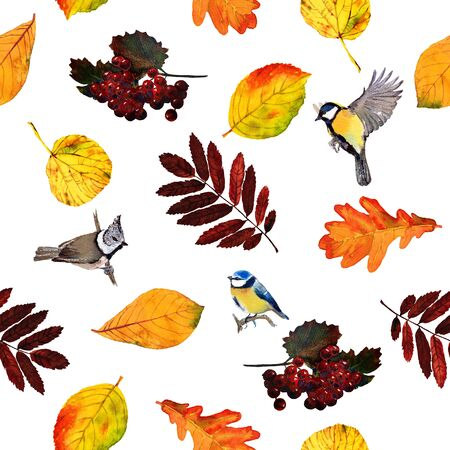 parus: Seamless watercolor pattern birds with autumn leaves and berries. Beautiful red, orange and yellow colors of fall. Textile print. Isolated on white background. Stock Photo