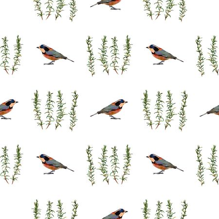 twit: Birds and rosemary. Handmade watercolor floral seamless pattern, isolated on white background. Fabric texture. Herbs vintage design. Stock Photo
