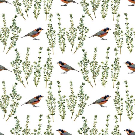 twit: Birds and thyme. Handmade watercolor floral seamless pattern, isolated on white background. Fabric texture. Herbs vintage design. Stock Photo