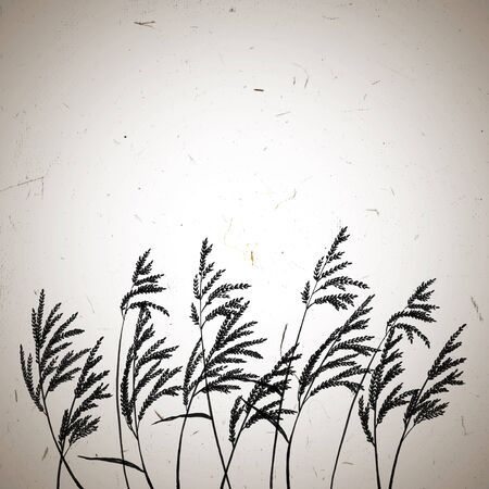 condolence: Grass panicles swinging in the wind.  Hand painted ink illustration on a grungy raw textured background with vignette. Template for your design.