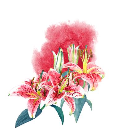 Beautiful pink tropical lilies and watercolor splash. Isolated on white background. Isolated on white background. Fashion, stationery, greetinginvitation card Hawaiian style, botanical illustration.