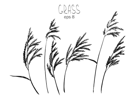 panicle: Isolated on white background reed. Elements for your design.