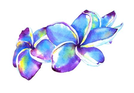 Hand painted plumeria flowers, purple and blue. Watercolor illustration isolated on white background. Element for your design. Stock Photo