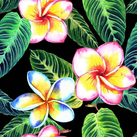 oceania: Seamless floral tropical pattern. Hand painted watercolor exotic plumeria flowers and calathea leaves, on black background. Textile design.