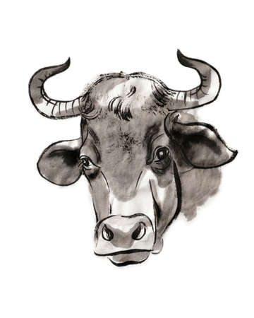 Cow portrait, sumi-e illustration. Oriental ink wash painting. Symbol of the eastern new year of the Ox.