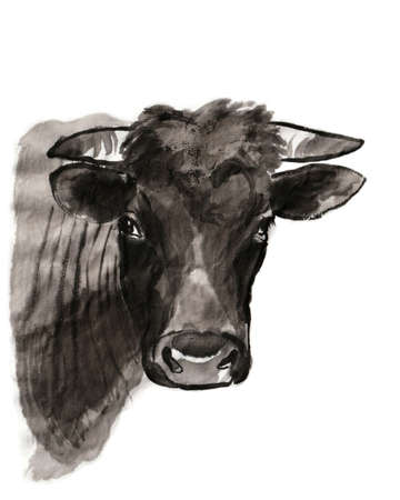 Bull portrait, sumi-e illustration. Oriental ink wash painting. Symbol of the eastern new year of the Ox.