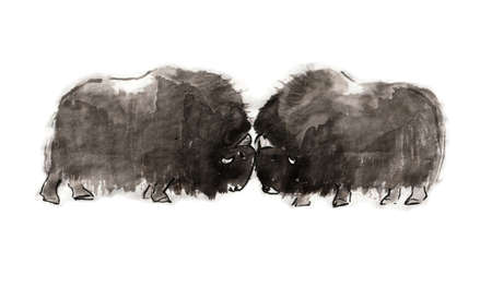 Head-butting musk oxen, sumi-e illustration. Oriental ink wash painting. Symbol of the eastern new year of the Ox.