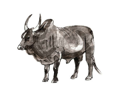 Zebu bull, sumi-e illustration. Oriental ink wash painting. Symbol of the eastern new year of the Ox.