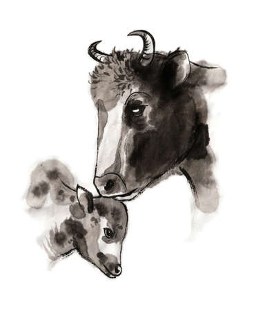 Cow and calf portrait, sumi-e illustration. Oriental ink wash painting. Symbol of the eastern new year of the Ox.