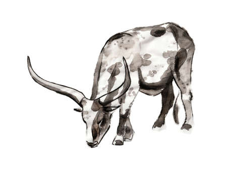 Grazing Sanga cow, sumi-e illustration. Oriental ink wash painting. Symbol of the eastern new year of the Ox.
