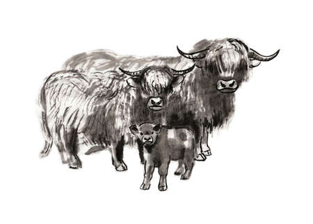 Family of Highland cattle: bull, cow and calf, sumi-e illustration. Oriental ink wash painting. Symbol of the eastern new year of the Ox.