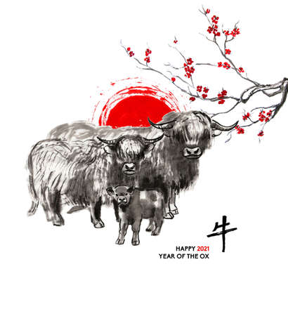 Family of Highland cattle: bull, cow and calf, a sun disk and a branch of cherry blossom, oriental ink wash painting, sumi-e. Hand painted greeting card Eastern new year. With Chinese hieroglyph 'Ox' 免版税图像