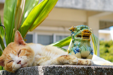 Shisa and cat Stockfoto