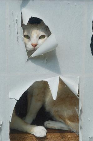 Cat peeking through the cracks torn