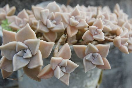 Succulent plants are densely blooming