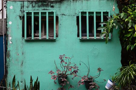 Emerald green old wall and houseplant with lattice window