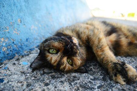 Cat lying on the roadside