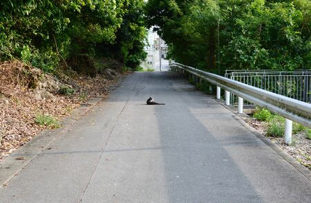 A cat relaxing in the middle of the road