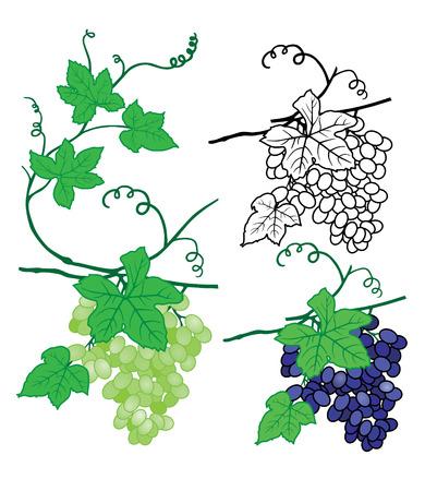 vecteur de raisins Vecteurs
