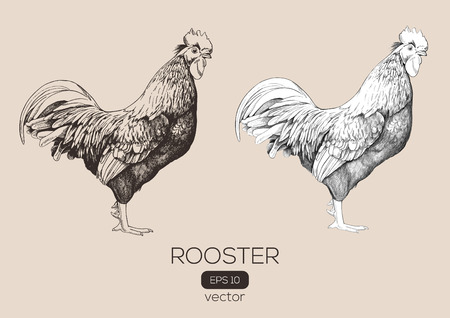 Roosters or cock on a transparent background, sketche made by hand. Vector illustration.