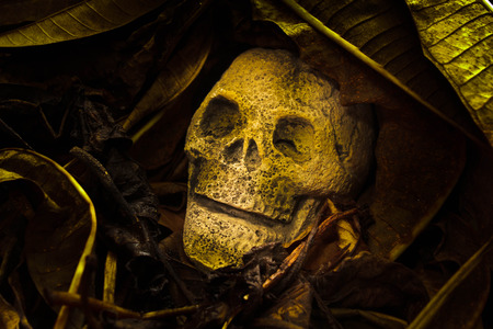 human skull with old leaves on ground floor.