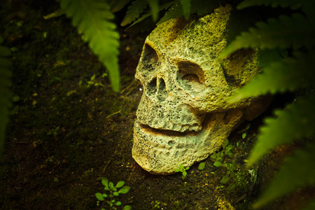 scary skull head in the forest.