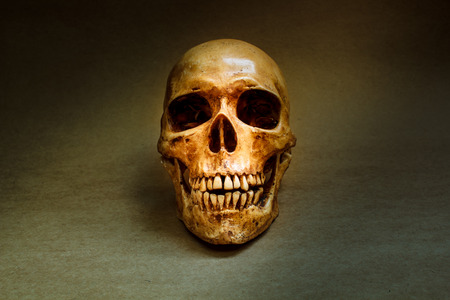 cadaver: Still life with a human skull concept on the art. Stock Photo