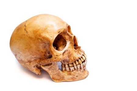 cadaver: Still life with a human skull isolated on white.