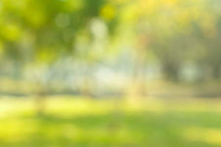 background color: blur natural and light background in the park. Stock Photo