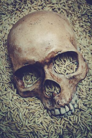 'no people': Human skull and rice paddy, still life.