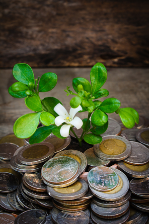 economic revival: Still life coins and tree, Thai baht.
