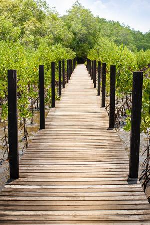 mangroves: Forest at the river estuary or Mangroves forest.