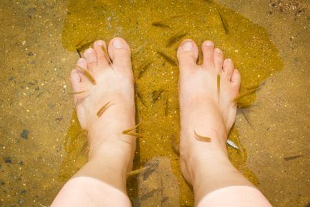 fish spa: Natural fish spa therapy and foot massage.