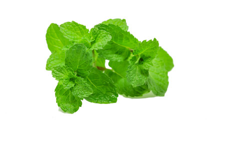 Mint leaves isolate on white background. Stock Photo
