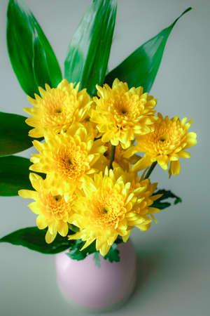 Yellow chrysanthemum flower, Beautiful flowers in a vase. Stock Photo