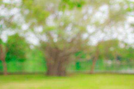 blur natural and light background in the park. Reklamní fotografie
