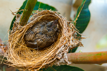 Baby bird in nest, bird make nest at people home.