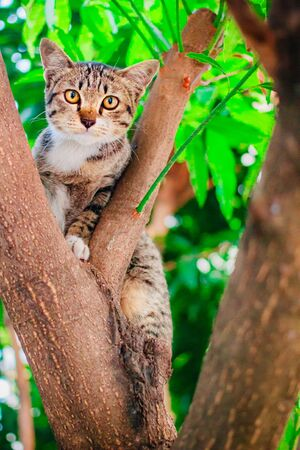 Cute tabby Kitten Relaxing on top of Tree.