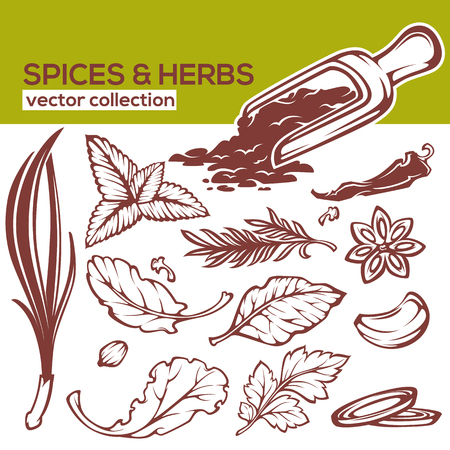oregano: cooking spices, herbs and leaves vector collection