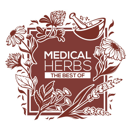 calendula: medical herbs, flowers, plants and leaves, vector template design
