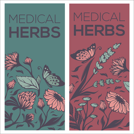 camomile tea: medical herbs, flowers, plants and leaves, two vector flyer template design Illustration