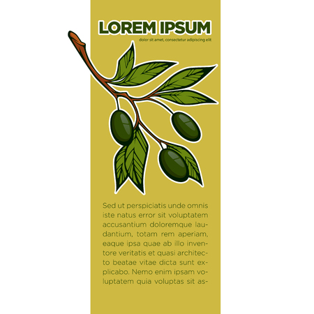fresh olives, vector background template for your olive oil label