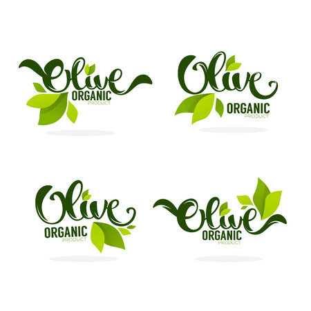 green olive leaves and lettering compositions  , vector collection of templates, labels, symbols 일러스트