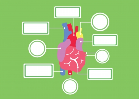 human right: heart system vector cartoon style for use Illustration
