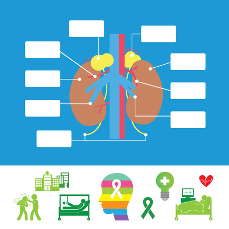vector kidney anatomy hospital icon set