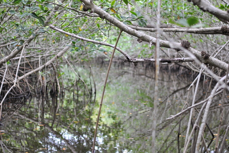reflections on the creek Stock Photo