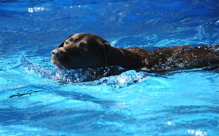 Dog swimming on a hot summer day.