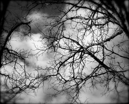 forrest: Een groep van eng bomen op halloween, in de herfst.